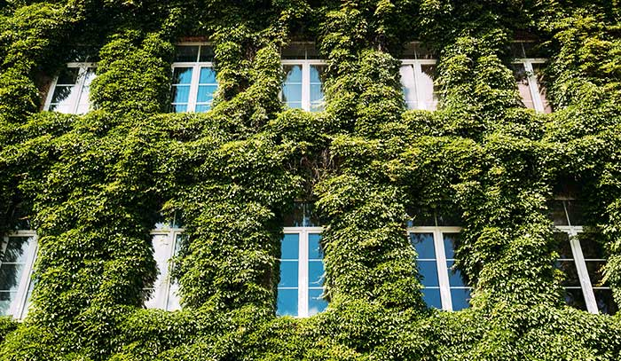 caracteristicas de las fachadas vegetales